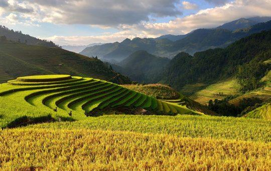 Nowoczesne obiekty dla rolnictwa
