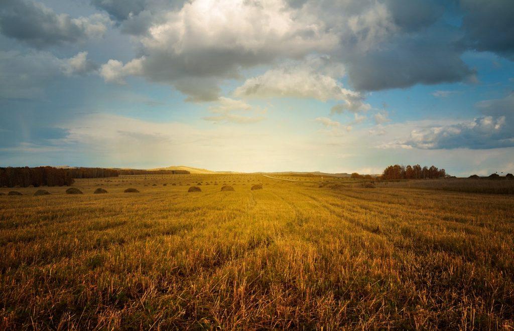 Dlaczego nowoczesne hale dla rolnictwa to dobry wybór?