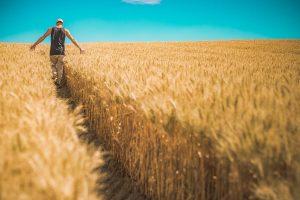 Hale namiotowe rolnicze: dlaczego to dobry wybór?